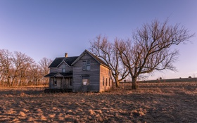 Картинка поле, свет, дом, дерево, утро