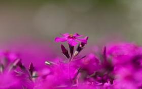 Обои цветок, природа, краски, лепестки