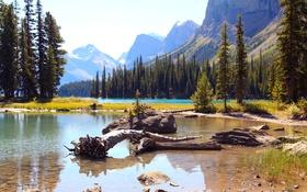 Обои лес, деревья, горы, озеро, камни, скалы, Alberta