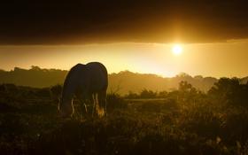 Обои закат, природа, конь
