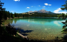 Обои лес, деревья, горы, озеро, Канада, Альберта, Jasper National Park