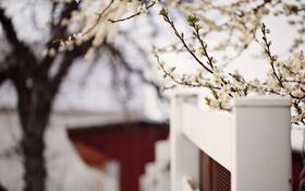 Обои забор, весна, сад