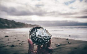 Обои пляж, рука, ракушка