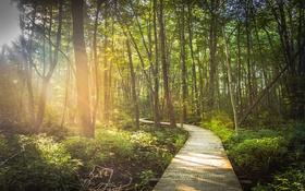 Обои лес, деревья, дорожка