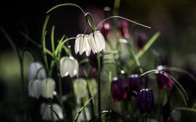 Картинка фон, природа, цветы