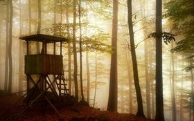 Обои лес, туман, вышка