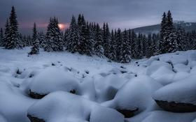 Картинка зима, снег, деревья