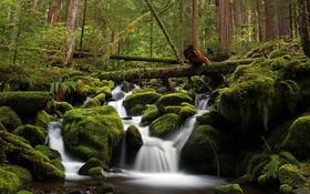 Обои лес, вода, деревья, зеленый, река, камни, мох