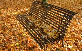 Картинка осень, листья, парк, сквер, скамья