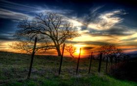 Обои hdr, деревья, поляна, изгородь, луг, небо, трава