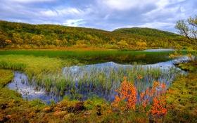 Обои осень, трава, река, камыши, Норвегия, Aunfjellet