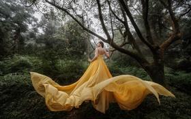 Картинка лес, девушка, желтое платье