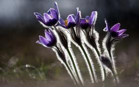 Обои цветы, природа, фон