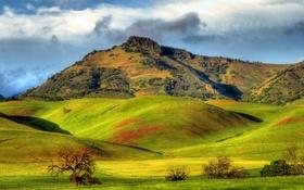 Обои зелень, солнце, облака, горы, холмы, поля, Калифорния