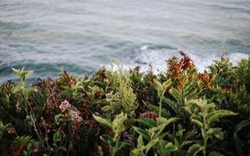 Обои волны, зелень, трава