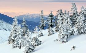 Картинка снег, деревья, горы