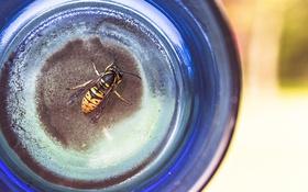 Обои пчела, оса, насекомое, желтое