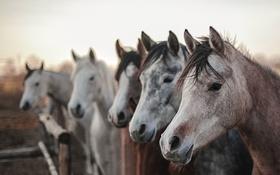 Картинка природа, фон, кони