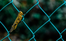 Обои metal, insect, grasshopper, wiring