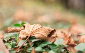 Обои осень, лист, листок, сухой