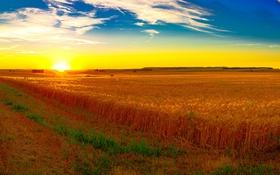 Обои поле, небо, трава, солнце, рассвет, простор, колосья