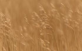 Обои трава, макро, природа, фон