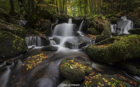 Обои лес, природа, река, листва, осень.камни