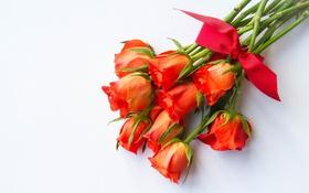Обои красный, розы, букет, бант