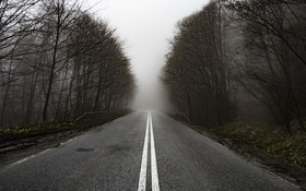Обои дорога, природа, туман