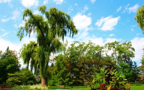 Обои зелень, небо, трава, облака, деревья, цветы, парк