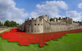 Обои Англия, Лондон, крепость, Тауэр, арт-инсталляция, керамические маки, 100-летие начала Первой мировой войны