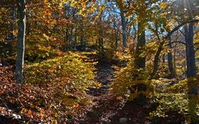 Обои осень, лес, листья, солнце, лучи, деревья, камни