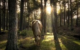 Картинка конь, лес, природа