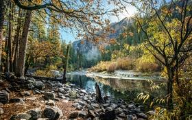 Обои горы, деревья, Калифорния, лучи солнца, лес, ручей, Йосемити