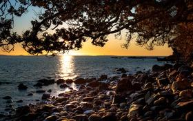 Картинка ветки, побережье, бухта, дерево, Новая Зеландия, море, Ruamahunga Bay