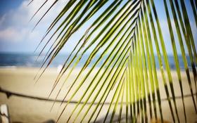 Обои лето, листья, пальма