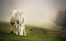 Картинка конь, фон, природа