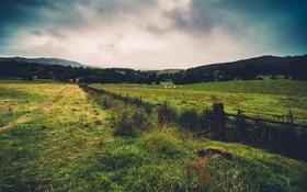 Картинка лето, небо, трава, облака, загон, стадо