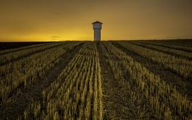 Обои поле, ночь, башня