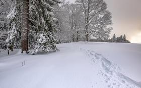Обои след, снег, зима