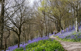 Обои дорога, лес, цветы