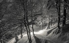 Обои ночь, снег, зима
