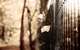 Обои листья, фон, забор