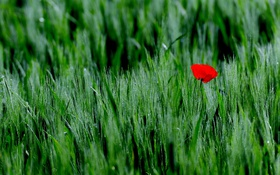 Картинка трава, пейзаж, цветы, природа