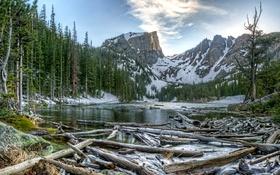 Картинка зима, лес, снег, деревья, горы, озеро, коряги