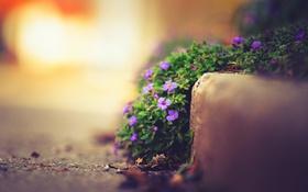 Обои цветы, природа, улица