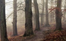 Обои тропинка, природа, деревья