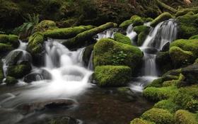 Обои лес, вода, река, камни, мох