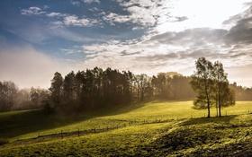 Обои поле, деревья, туман, утро