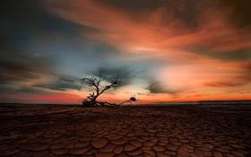 Картинка озеро, дерево, пустыня, текстура, сухая земля, коряга, кора
